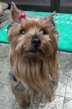 次男:野 クッキーは2013年11月17に14歳7ヶ月で永眠しました。